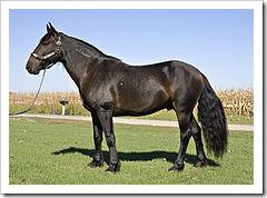 220px-Mustanggelding