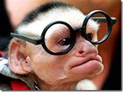 just monkeying around
