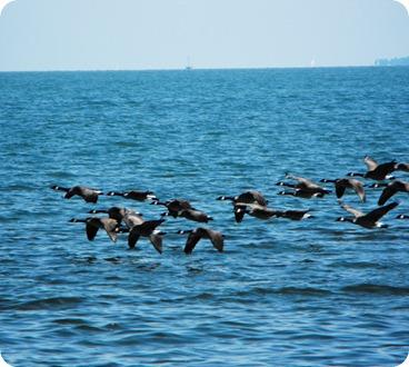 Put In Bay Lake Erie 070